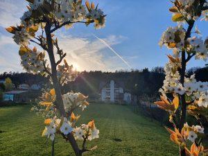 Gradina Forest Villa Detox Mindfulness