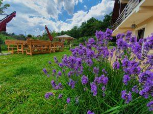 Gradina Forest Villa