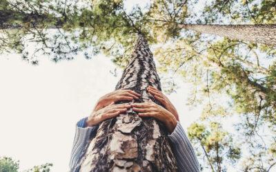 Forest Bathing – sau imersia în pădure